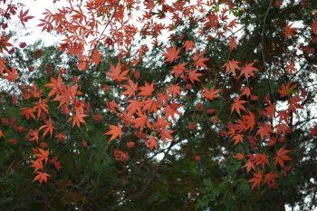 院内の紅葉