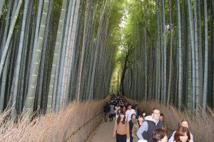 何故か外人が多い竹林