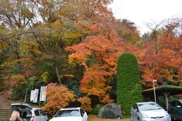 宝登山神社 駐車場紅葉