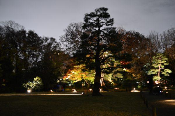 ライトアップされた木々