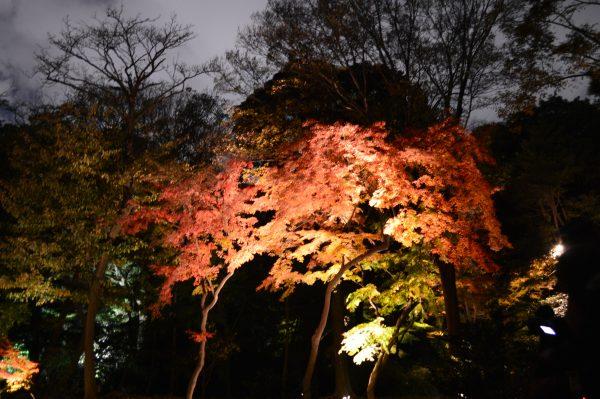六義園 紅葉