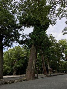風よけの松林