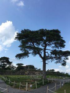竹田城の一本松