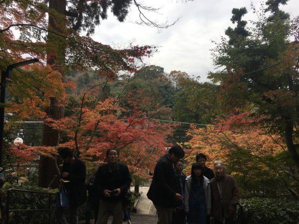 円覚寺入り口からの紅葉