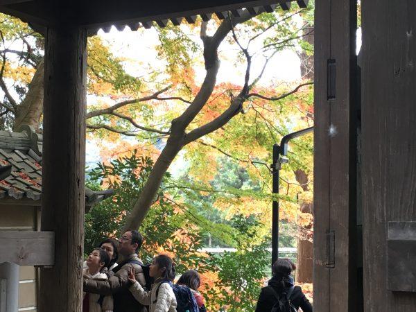 円覚寺山門越しの紅葉
