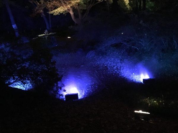 六義園紫の霧