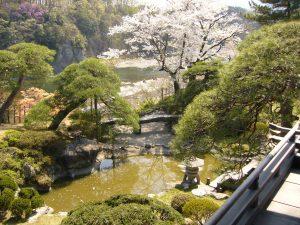 京亭の庭園と桜