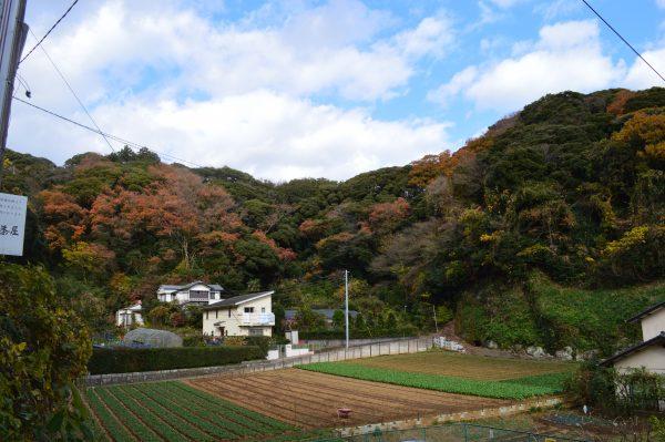 源氏山麓の畑
