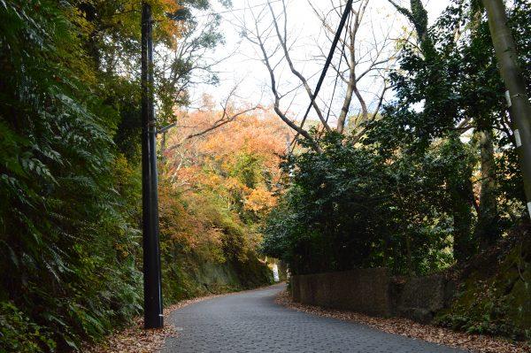 源氏山公園の坂