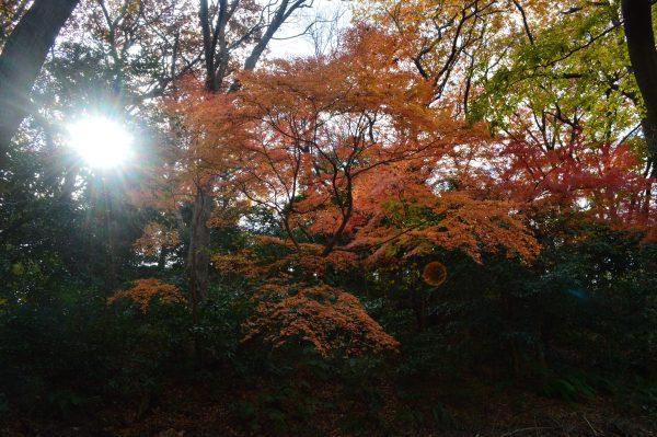 源氏山公園の紅葉と木漏れ日