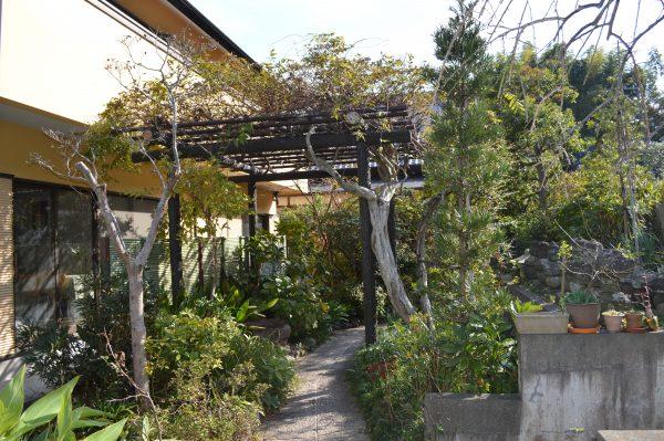 光照寺の花園