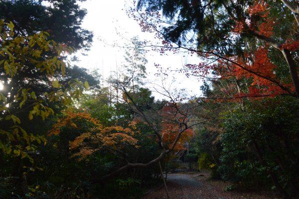 寿福寺境内裏