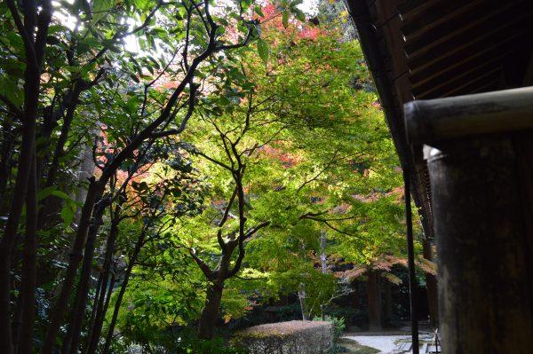 明月院庭園入り口付近