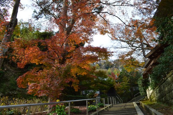 龍峰院前の紅葉