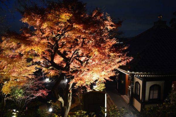 鎌倉「長谷寺」へアクセス!紅葉とライトアップ。昼と夜の顔