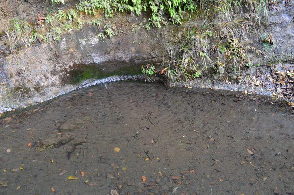 回春院の水源