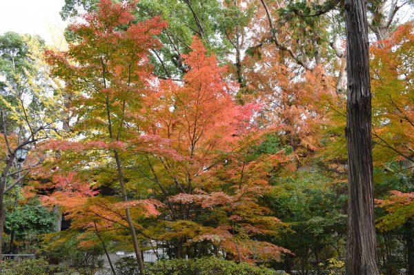 白旗神社の紅葉