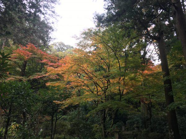 東慶寺深部の紅葉