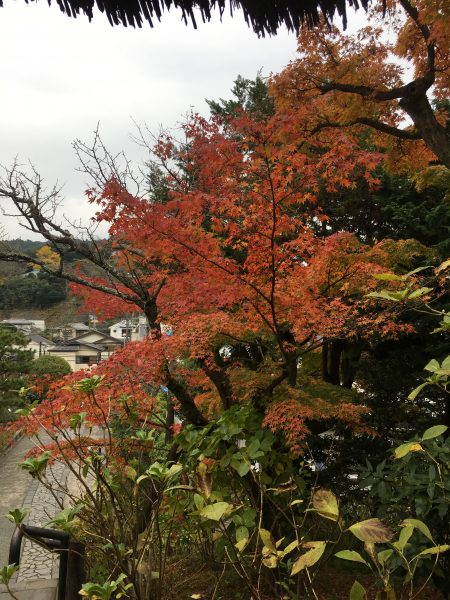 東慶寺入り口「紅葉」