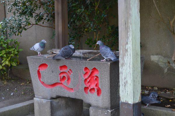 蛭子神社の手水とハト