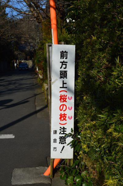 浄妙寺近くの桜