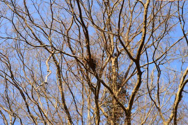 浄妙寺境内 鳥の巣