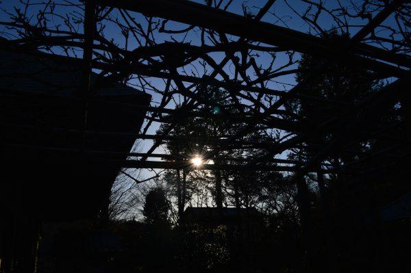 浄妙寺の生垣と夕陽