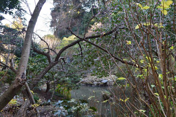 光則寺庭園の池