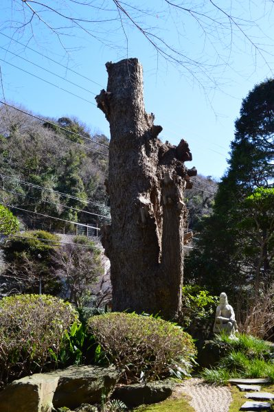 報国寺 観音像と大木