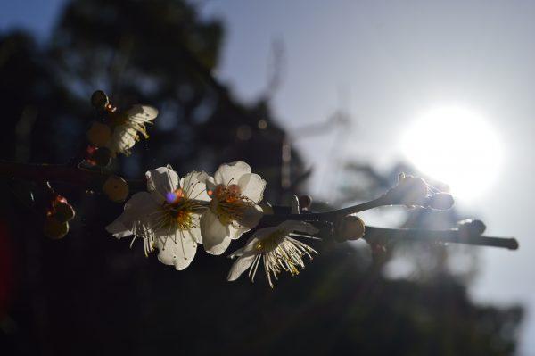 鎌倉「瑞泉寺」「夢窓疎石」による鎌倉時代から残る唯一の庭園