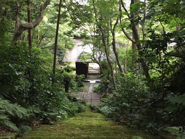 妙法寺 苔の石段